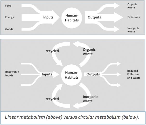 Linear metabolism versus circular metabolism