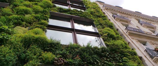 nature-based solutions vertical garden in the city / soluciones basadas en la naturaleza