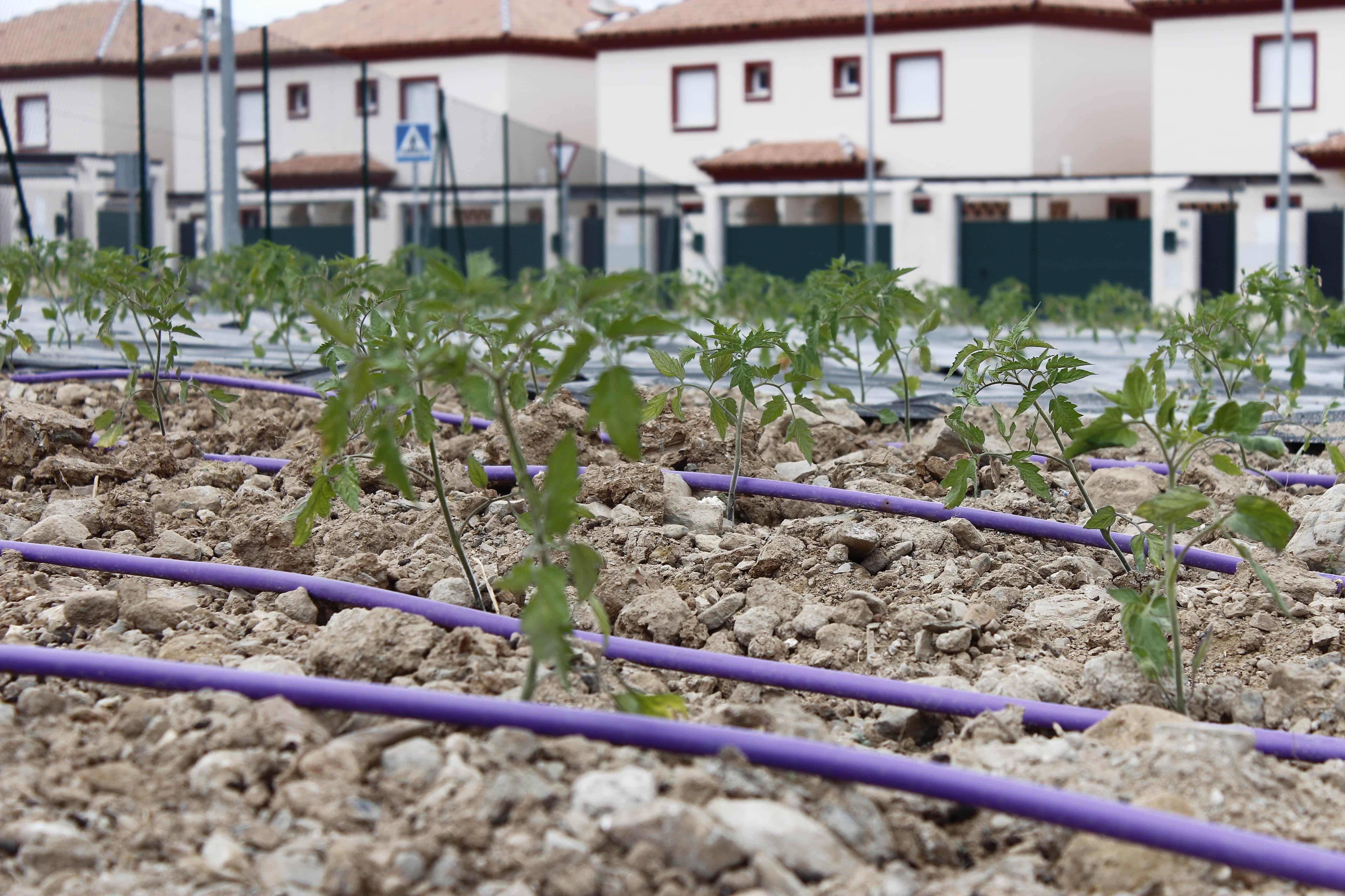 Sistema de agua regenerada diseñado por Bioazul para riego en huerto comunitario en Cártama (Málaga)