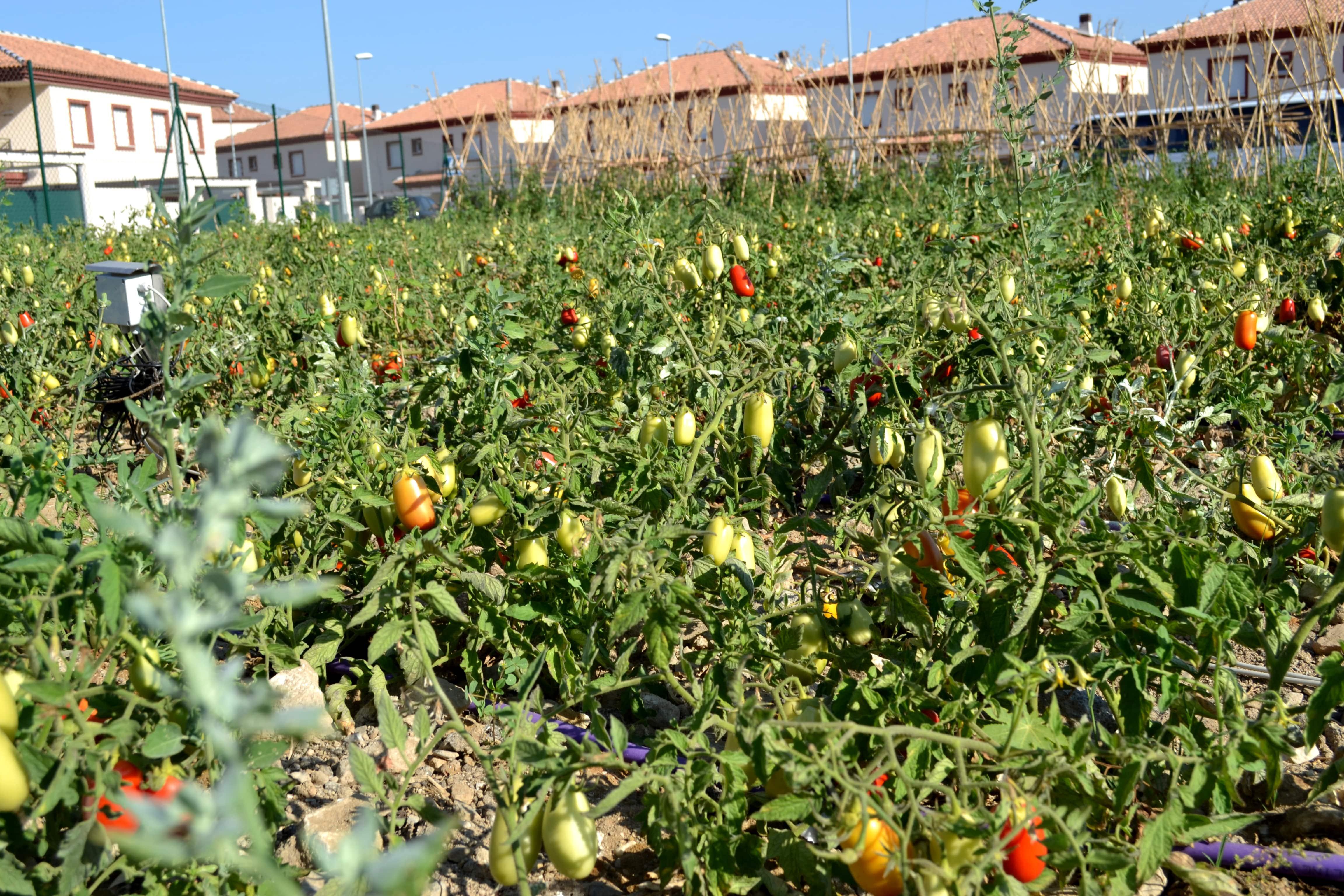 Reclaimed water system designed by Bioazul for irrigation in a community garden in Cártama (Málaga).