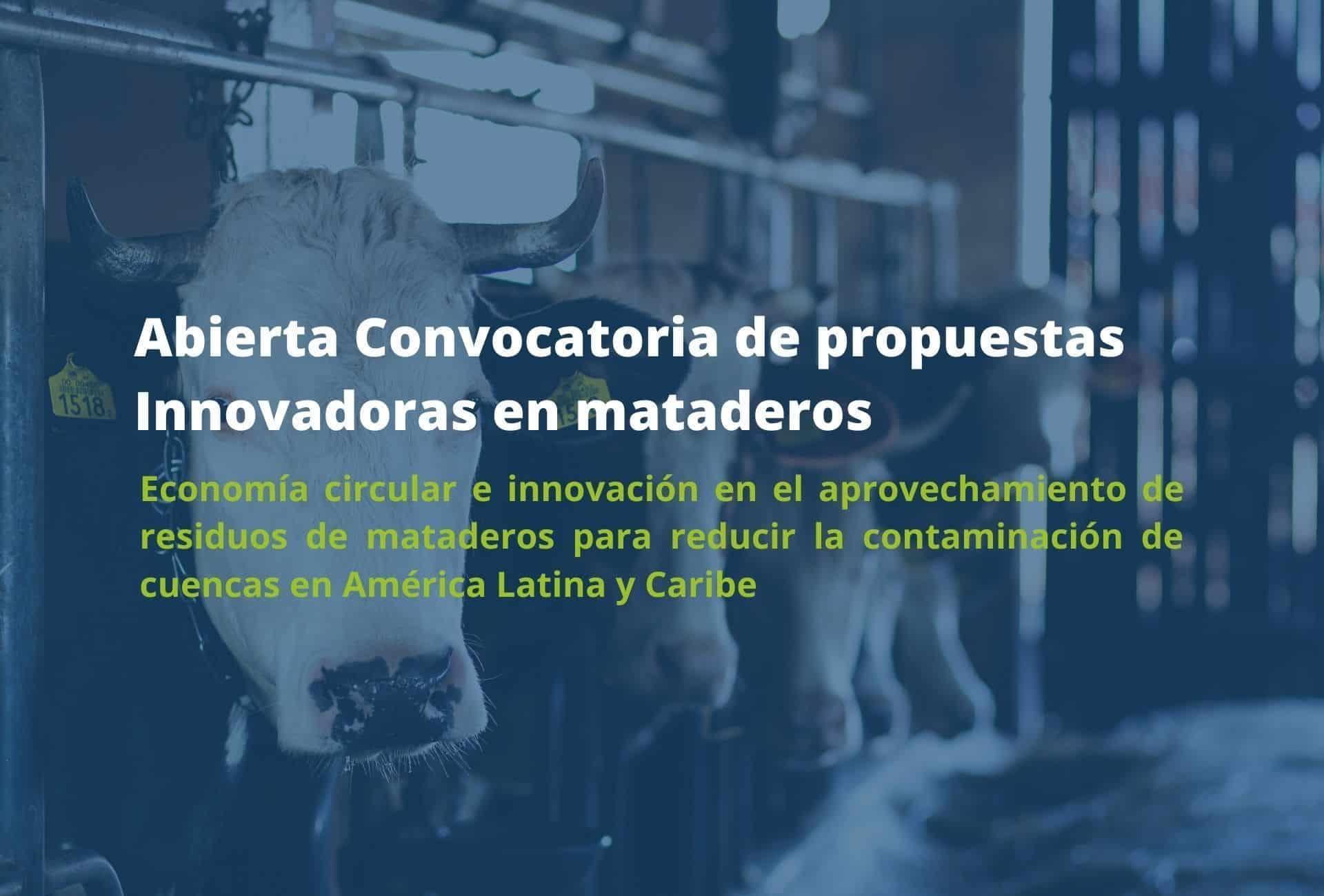 Abierta convocatoria innovaciones en sector matadero ALC